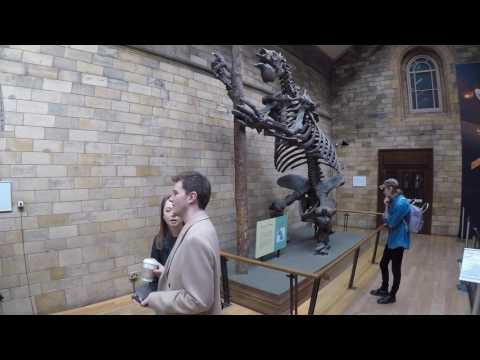Natural History Museum, London | Walkthrough Tour April 2017 | 1080p HD