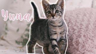 He adoptado una gatita | Yuna
