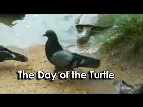 Ozzyman Cat Turtle Video