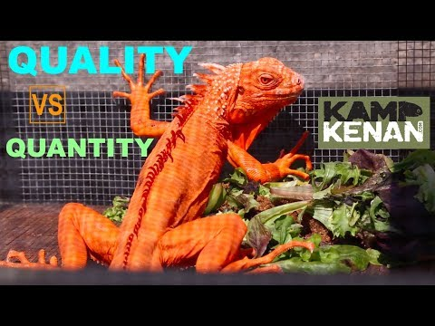 LESS is MORE with REPTILES