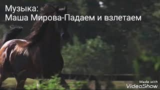 АРАБСКИЕ ЛОШАДИ.  КЛИП♥ (ОПИСАНИЕ)
