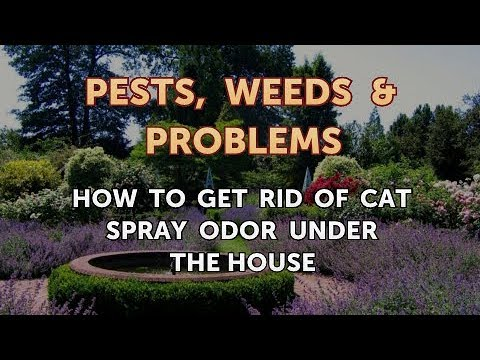 How To Get Rid Of Cat Spray Odor Under The House