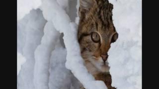 Ночные Снайперы - Кошка