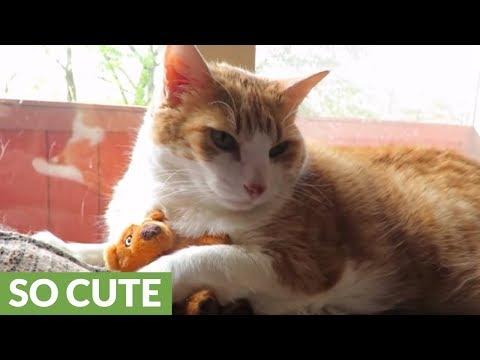 Cat Preciously Cuddles With Small Teddy Bear