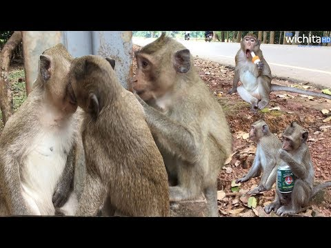 Monkey Kissing First Time - Wow Monkeys Can Kiss Each Other Like US