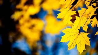 გია ყანჩელი - ყვითელი ფოთლები / Gia Yancheli - Yellow leaves