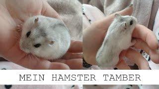 Mein neuer Hamster ✨  🐹
