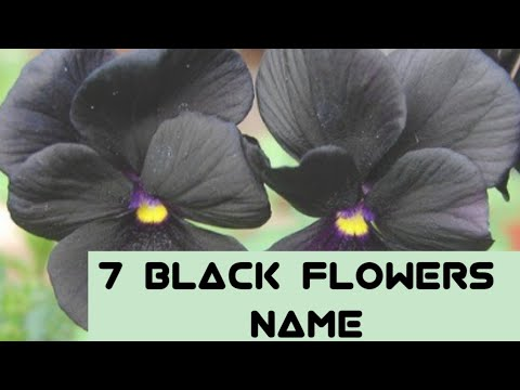 7 Black Flowers Name||Black Flowers Name In English With Pictures