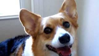 "Yassy's Gourmet Dog Kitchen; Take 1 ""find It Game"""