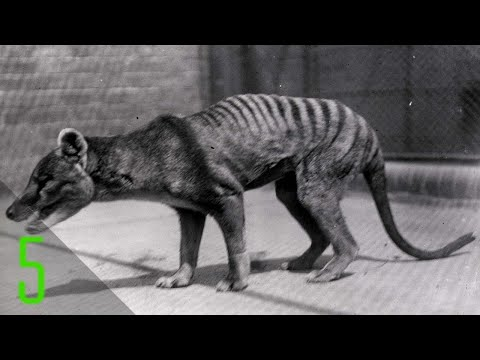 5 Rare Final Videos of Animals that are Now Extinct