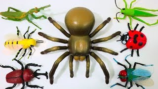 Bug Names For Kids Insects Bugs Reptiles Farm Animals Toys Collection Learn Colors For Children