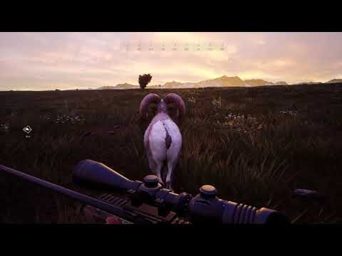 Hunting Simulator 2 The Bighorn that Won't give up |