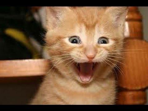 фото няшные котики