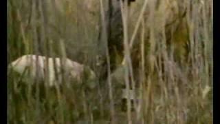 Ohlamon  (Охламон)  1993г  9/10