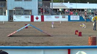 Halifax Co Exhibition Horse Dog Relay Team #8 Audrey And Benson