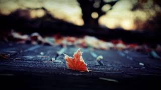 Distant Dream - Falling Leaf