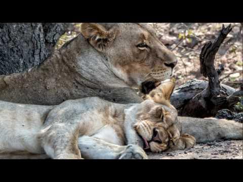 Kruger Ultimate Africa Trip 2016