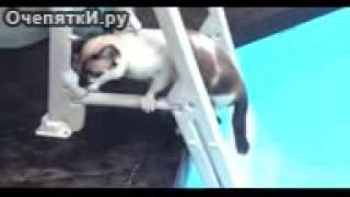 Приколы про животных кошки любят плавать