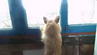 Тинка любит смотреть в окно