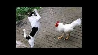 Try Not To Laugh Watching Funny Animals Compilation | Funniest Animals Vines 2019