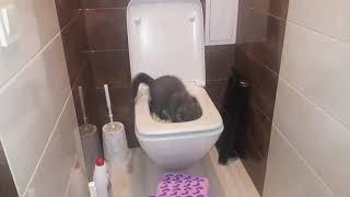 #1 Как приучить кота к унитазу. Котенок 3 месяца