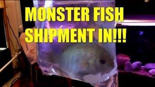 MONSTER FISH SHIPMENT IN!!!
