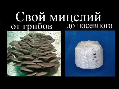 Грибоводство в Оренбурге – цены, фото, отзывы, купить