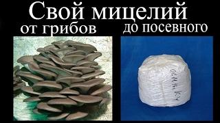 Свой мицелий. От грибов до посевного