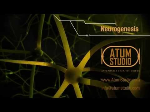 """Neurogenesis"" Thesis 3D Visualization"