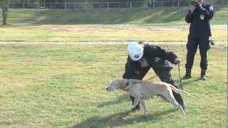 Fema Canine Training