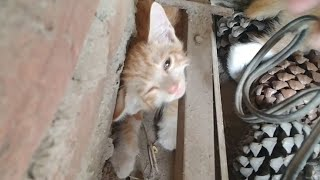 Rescued Starving Kittens Crying For Their Mother From 2 Days But Mother Cat Never Came Back