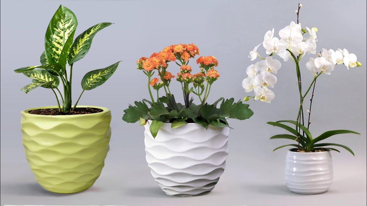 Easy cement pottery Making    Cement flower vase - Gypsum flower vase making