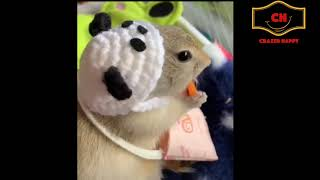 Funny animals WILL MAKE YOU LAUGH like crazy - Funny Animals Compilation