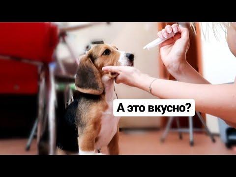 Когда у собаки болит живот