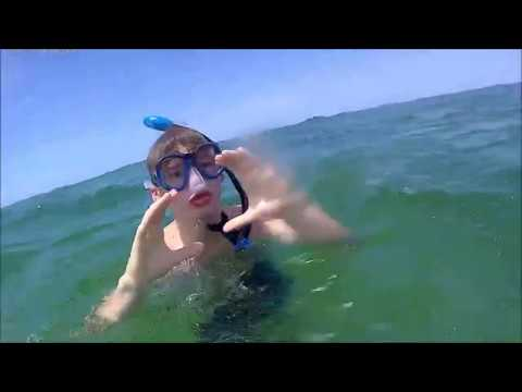 Venice Beach, FL - Shark Teeth & Shells