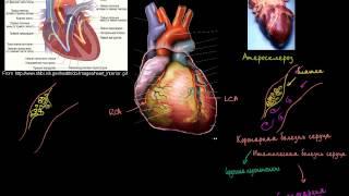 ИБС и сердечные приступы