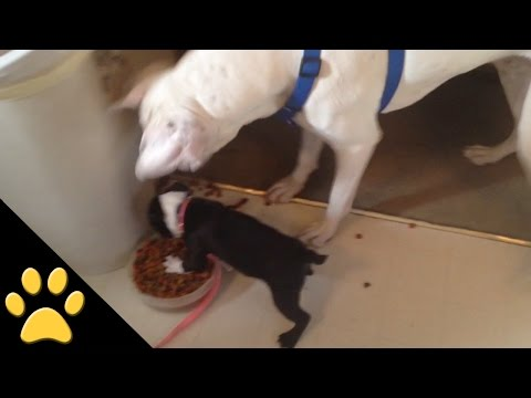Little Dog Refuses to Share His Lunch