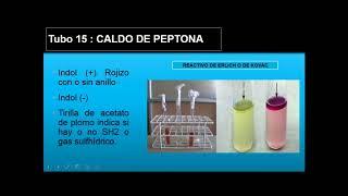 pruebas bioquimicas final bacteriologia