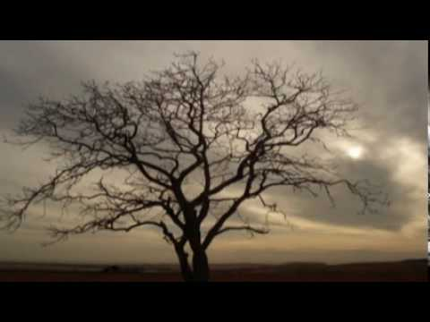 Valentine's Day-Linkin Park with lyrics