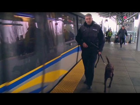 Meet the new Transit Police dog