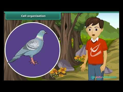Characteristics of Living Organisms | Class 6 | Science | CBSE | ICSE | FREE Tutorial