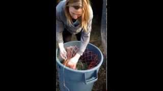 Hayweyer Slow Feeder Diy Safe, Cheap, Easy, Portable Horse Hay Net Bucket