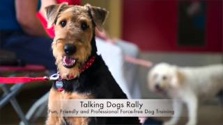 Talking Dogs Rally - Happy Dogs And Owners