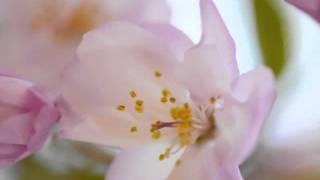 作曲:MAYUMI 作詞:今井美樹 うた:yu-na♬ 演奏:yu-na♬ 動画編集:yu-...