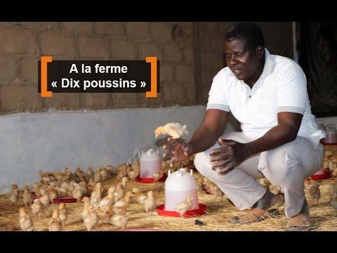Burkina Faso : A la ferme «Dix poussins»