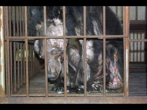 StopAbusingBears Oliver, rescued by Animals Asia. #WorldBearDay ...