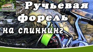 Ручьевая форель на спиннинг. Рыбалка в Ленинградской области.