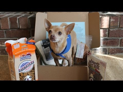 Cute dog, Tommy chihuahua - Dog treats unboxing