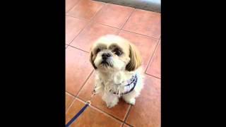 迷い犬で愛護センターに保護され、1年半前にうちの子になった たっくん ...