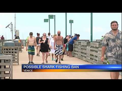 Possible shark fishing ban at Venice Pier